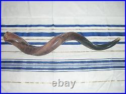 Sale Shofar 31-34 Kudu Yemenite Horn Shofars Kosher All Polished Jewish Israel